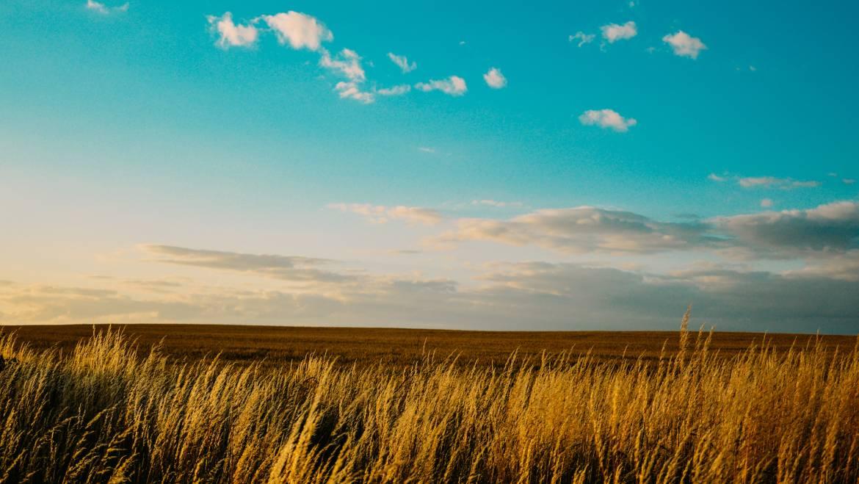 Agricultură, industrie, protecţia mediului și amenajarea teritoriului
