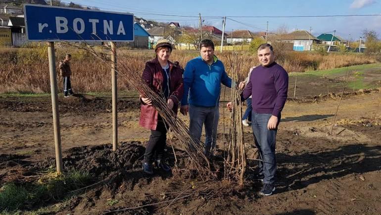 600 de copaci plantați pe malul rîului Botna din satul Costești