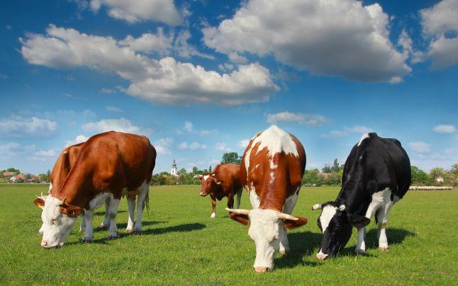 Registrul de Stat al Animalelor: MIJLOACE DE INDENTIFICARE A ANIMALELOR