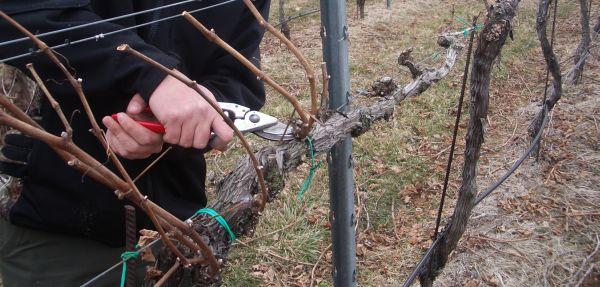 """Instruirea viticultorilor  """"Elemente ale tehnologiilor noi în viticultură. Specificul tăiatului în uscat al viței de vie în anul 2018"""""""