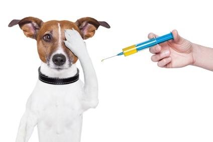 Vaccinare gratis pentru cîinii din satul Costești