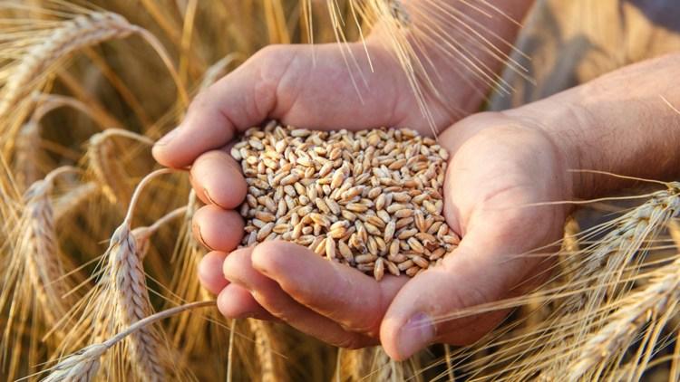 Seminar pentru agricultorii culturilor cerealiere