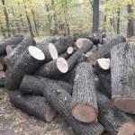 "ÎS ÎSC ""Sil-Răzeni"" propune spre vânzare lemne de foc"
